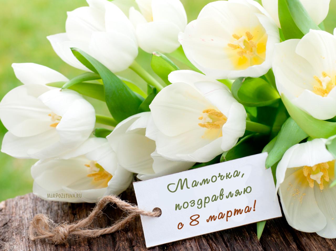 Прикольные поздравления на 8 марта женщинам. красивые и короткие пожелания в стихах и прозе