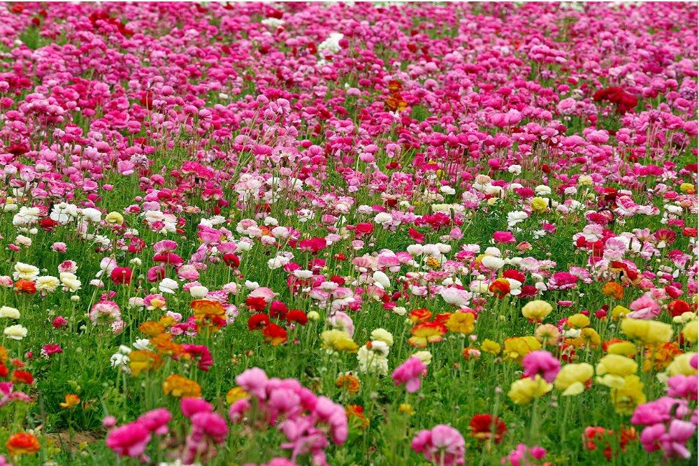 """Открытое занятие по аппликации """"цветочная поляна"""" план-конспект занятия по аппликации, лепке (подготовительная группа) на тему. занятие по аппликации """"цветочная полянка"""" цветочная поляна аппликация для детей"""