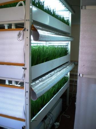 Самодельная установка для выращивания зеленого лука – пера.
