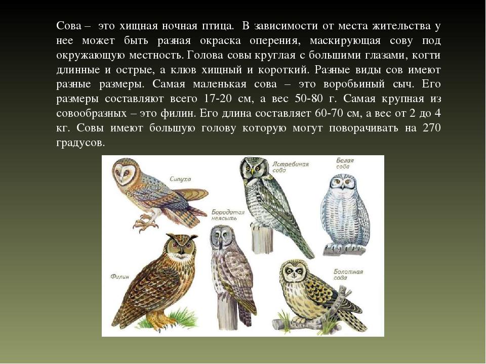 Птица сова: 130 фото, интересные факты и подробное описание семейства птиц