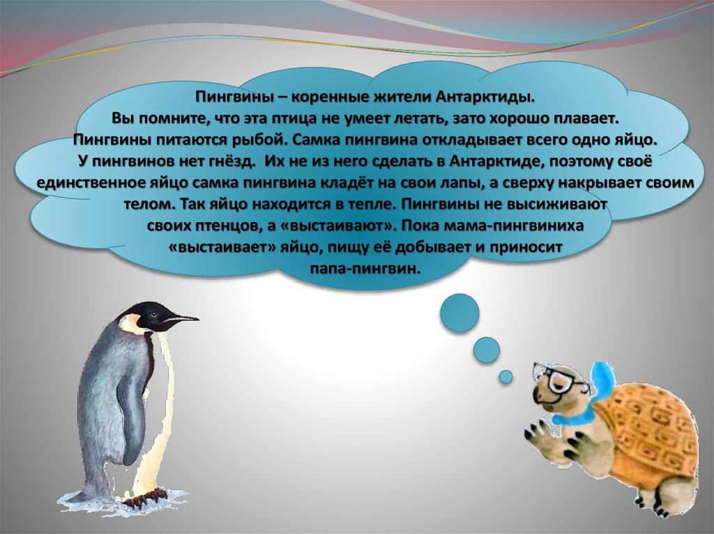 Виды пингвинов. описание, названия, особенности, фото и образ жизни видов пингвинов | животный мир