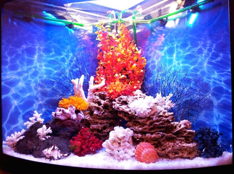Какие украшения изготавливают из коралла