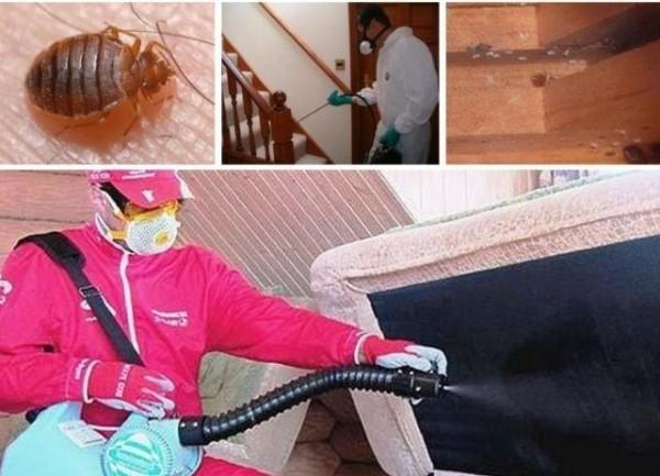 Ловушки для комаров: дорогие новинки против бюджетных вариантов