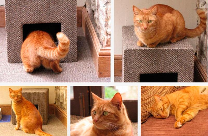 ? как сделать своими руками домик для кошки за 15 минут: лучшие мастер-классы с инструкциями