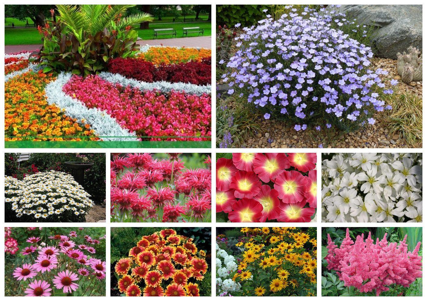 30 самых необычных цветов в мире: фото, названия