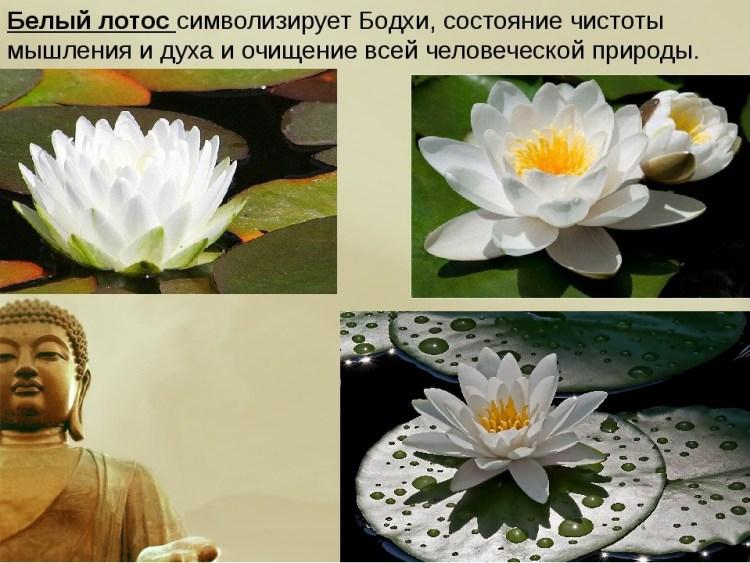 Что символизирует цветок лотоса?