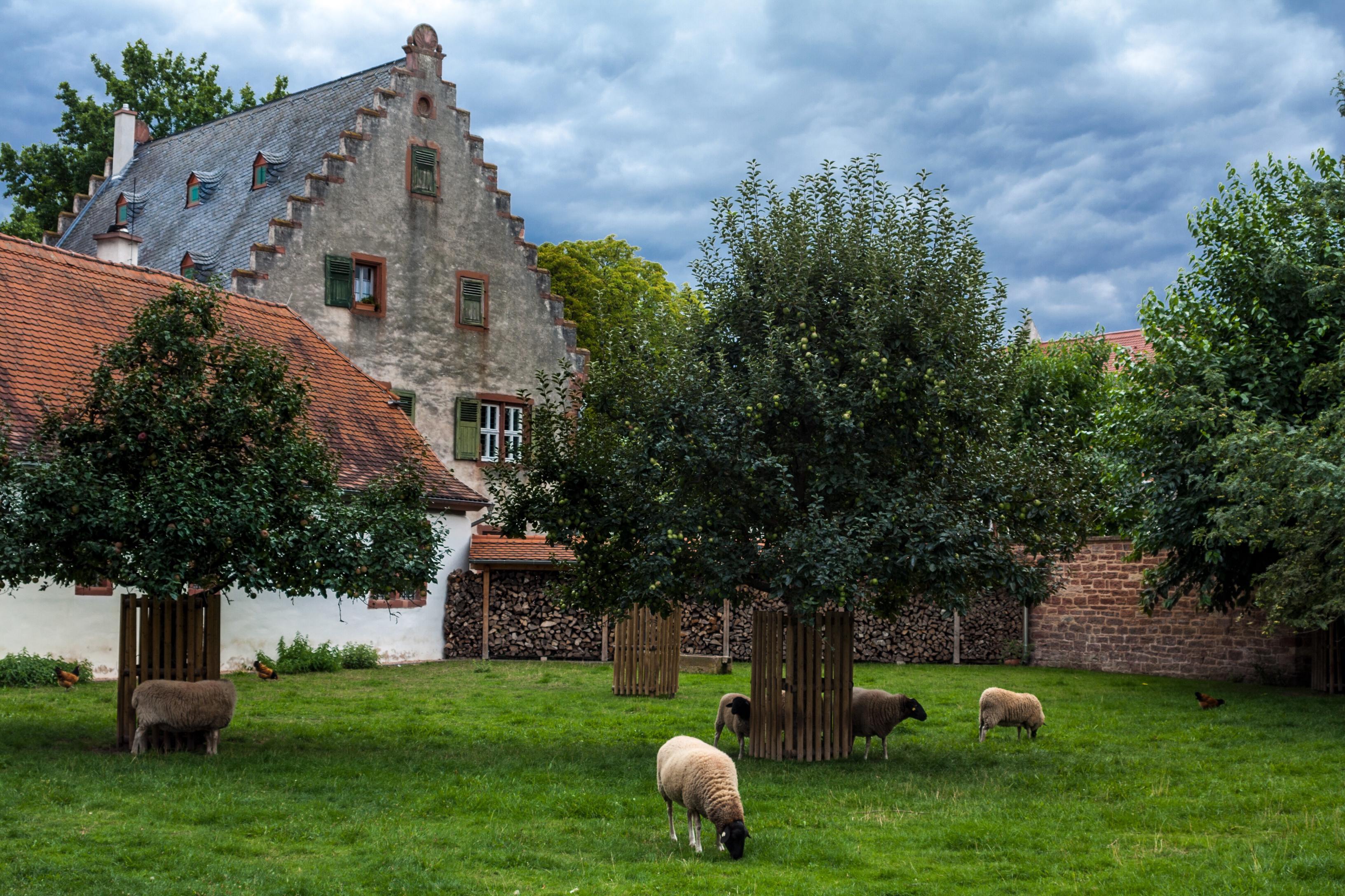 Домик с овечкой