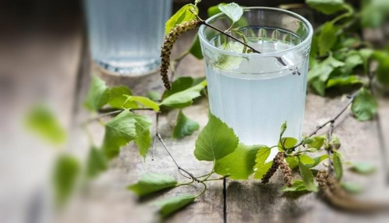 Как правильно собирать березовый сок: инструкция с видео | полезно (огород.ru)