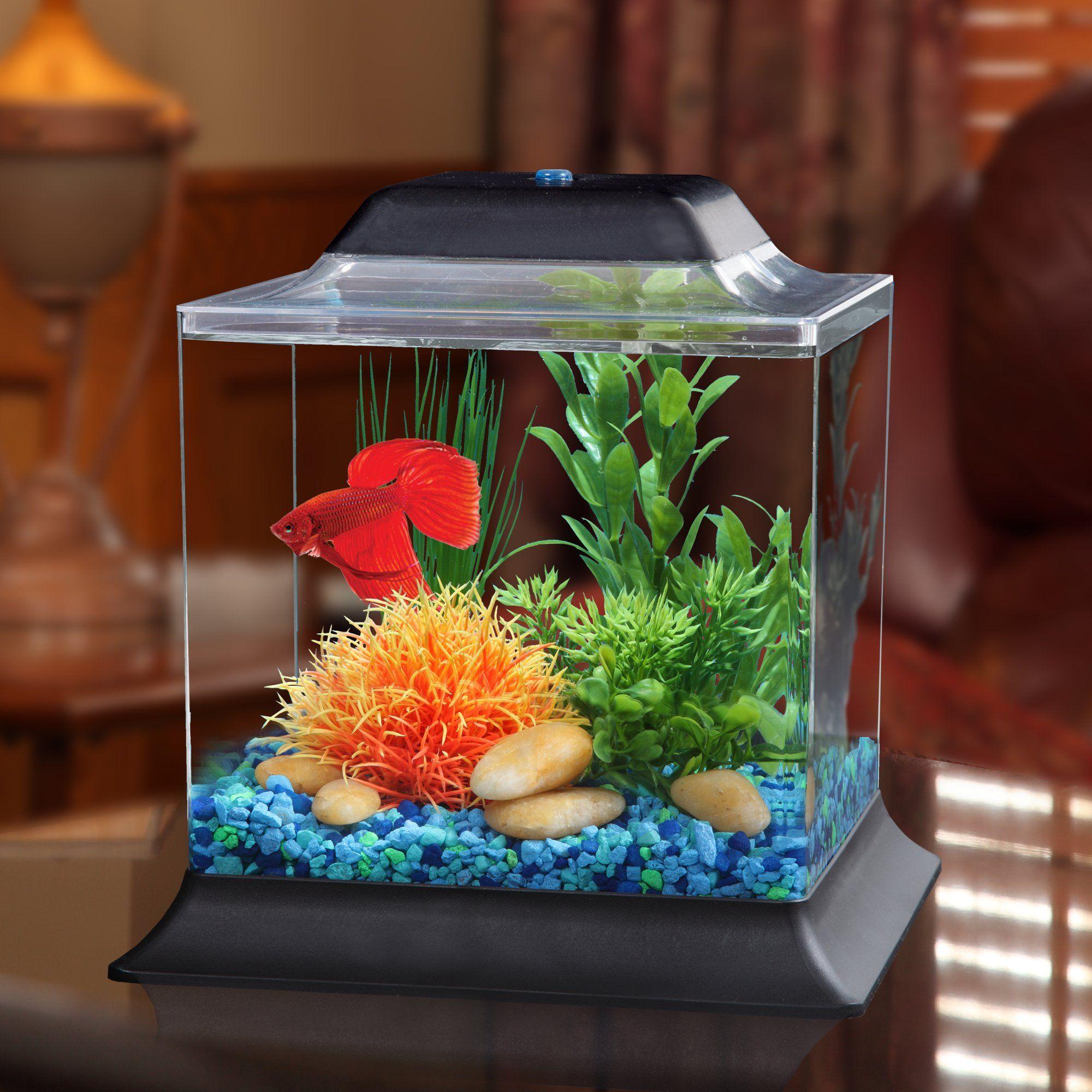 Мини-аквариумы: как оборудовать и каких рыб завести?