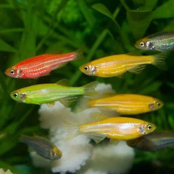 Самые неприхотливые аквариумные рыбы: разновидности, выбор и уход