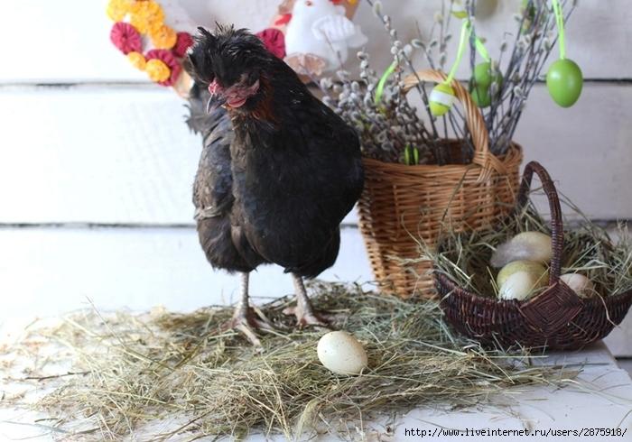 Курочка с пасхальными яйцами