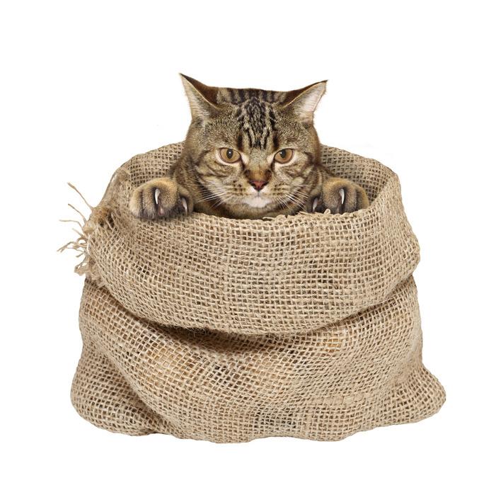 Как сделать открытку с кошкой своими руками. открытка с объемным котиком