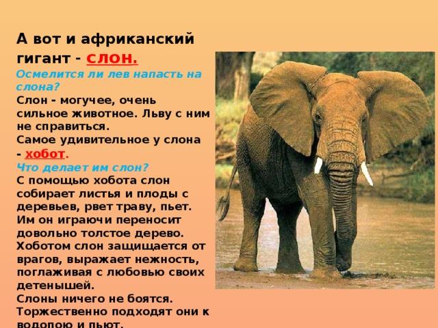 Слоны (лат. elephantidae)