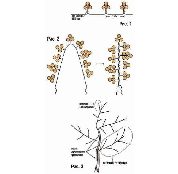 Дерево счастья своими руками из бисера схемы. как плести дерево из бисера? пошаговые инструкции с фото! мастер класс – надежный ориентир для рукодельниц