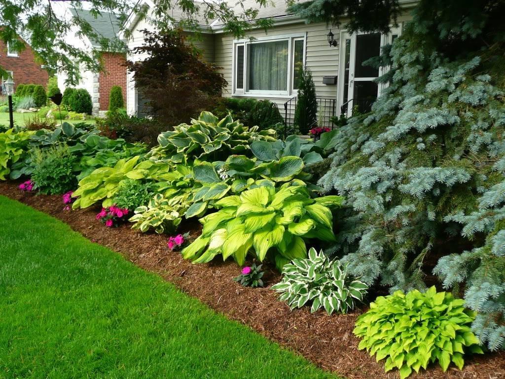 Лук многоярусный: посадка и уход, особенности выращивания, фото, видео