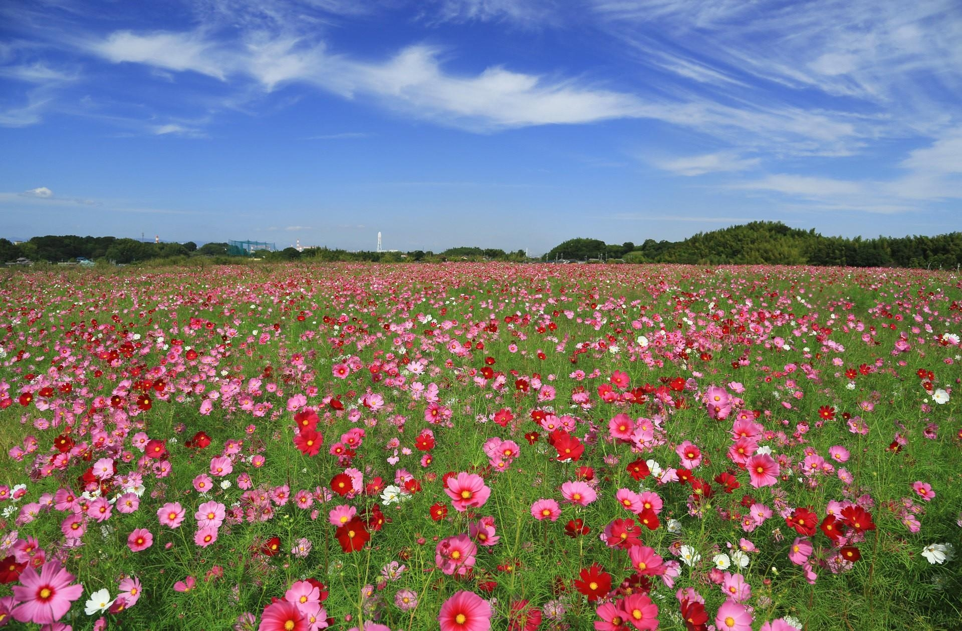 Интерьер аппликация цветочная полянка картон
