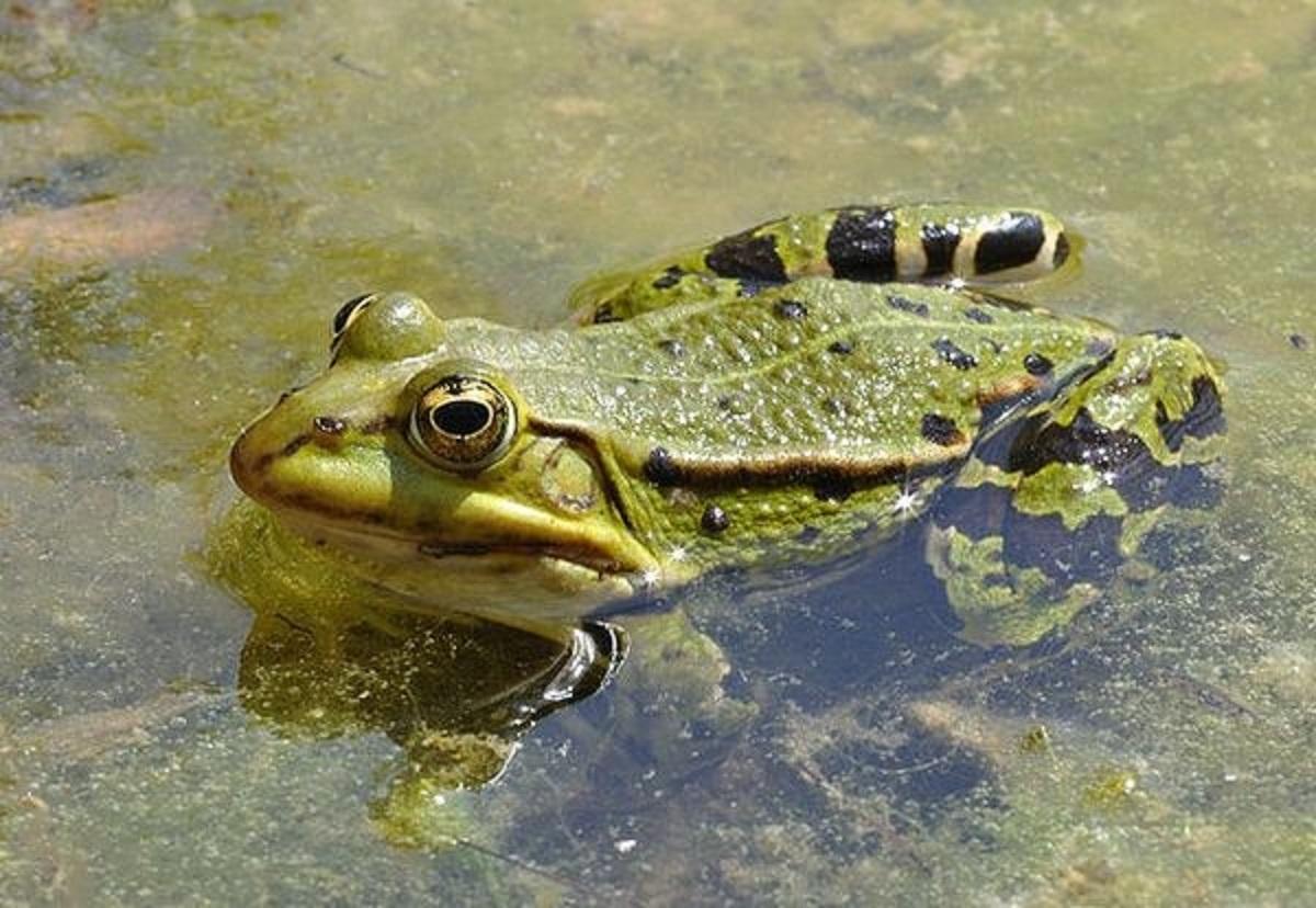 Сонник лягушка на озере. к чему снится лягушка на озере видеть во сне - сонник дома солнца