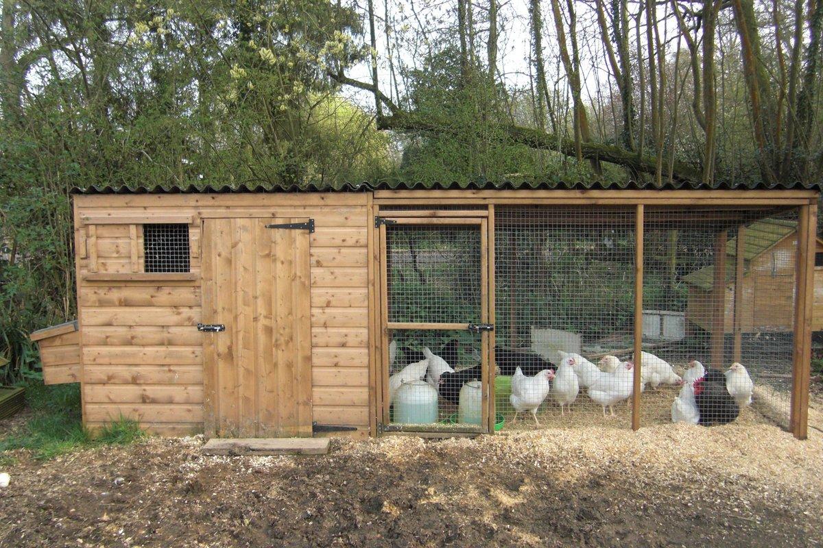 Строим цыплятник своими руками: инструкция, особенности конструкции и фото