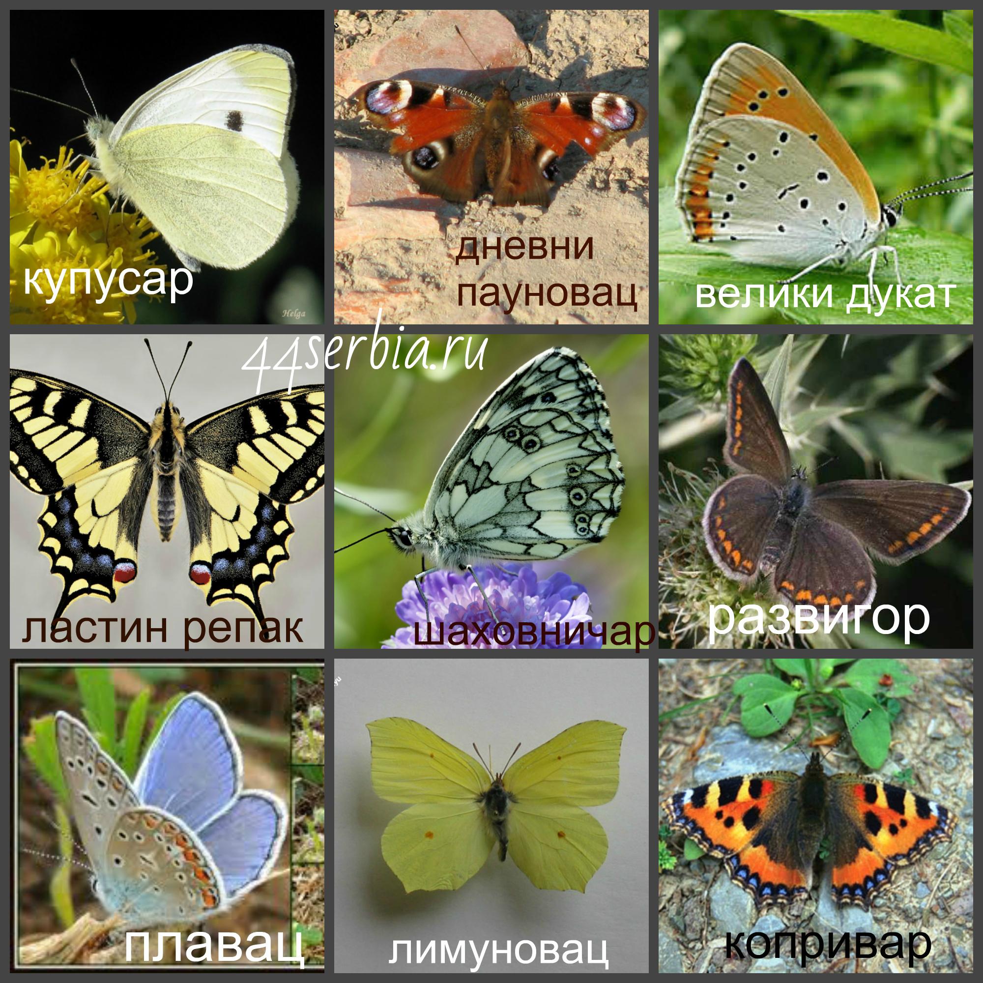 Бабочки – развитие, маскировка, строение, фото и видео - «как и почему»