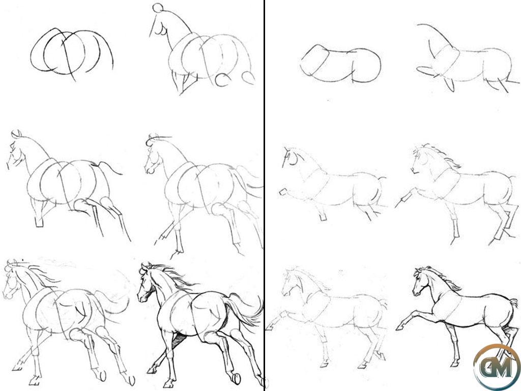 Как нарисовать лошадь поэтапно   рисунок лошади карандашом