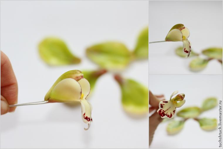 Цветы из холодного фарфора (27 фото): как сделать? инструкция по изготовлению для начинающих. как сделать маки из жидкого фарфора?