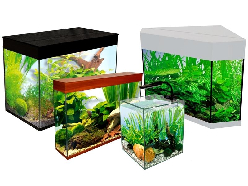 Маленький аквариум и каких рыбок заселить?