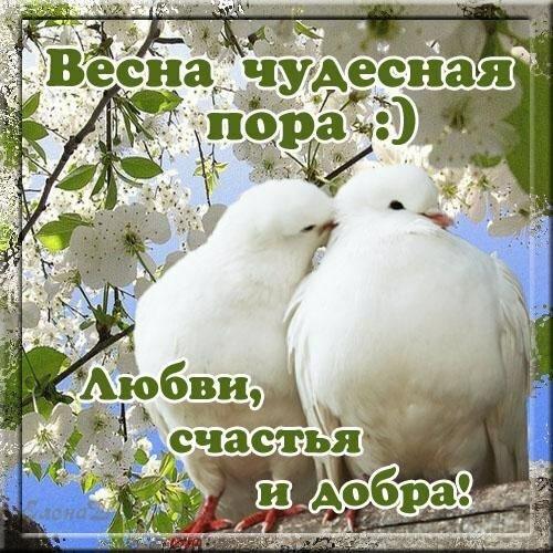 Красивые картинки, открытки и поздравления с началом весны