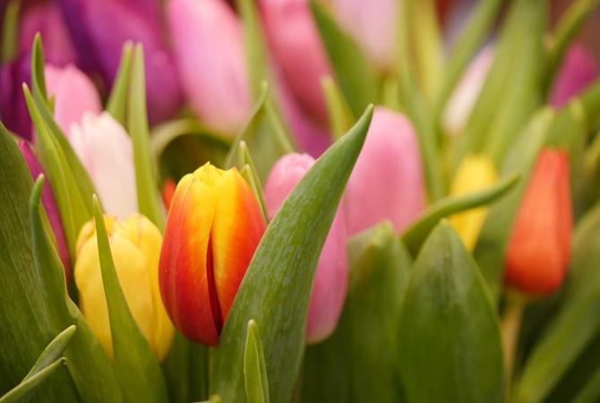 8 марта: поздравления женщинам к международному женскому дню в стихах и прозе