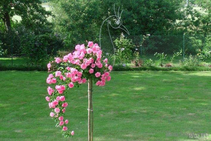 Штамбовая роза: описание, посадка, уход, ландшафтный дизайн с розами