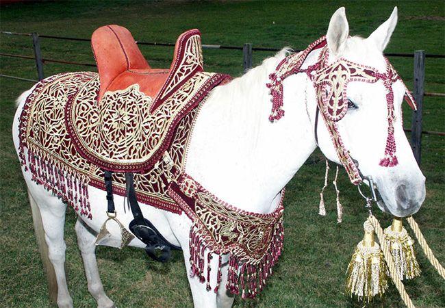 Одежда для лошади