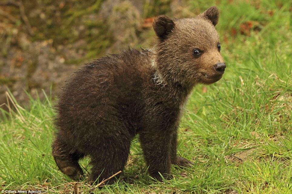 """Как пишется слово """"медвежонок""""?"""