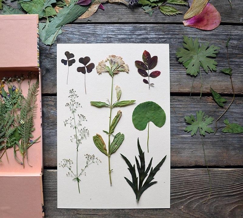 Гербарий своими руками для школы, для детского сада: описание, как сушить гербарий, как оформить, шаблоны для гербария. гербарий: как собрать, основные правила.