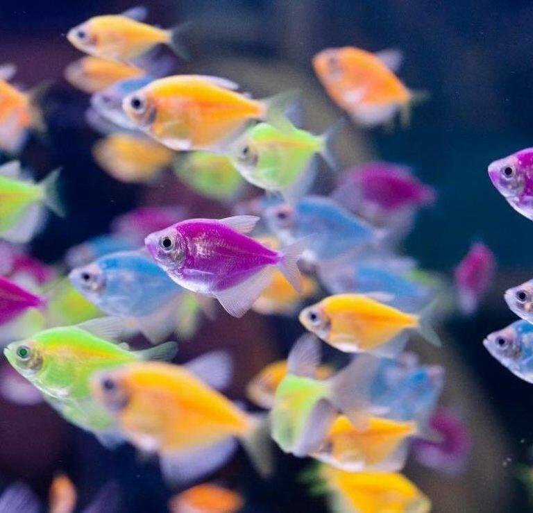 Аквариумистика для начинающих - выбор оборудования, обустройство и запуск аквариума, содержание и разведение рыбок в домашних условиях