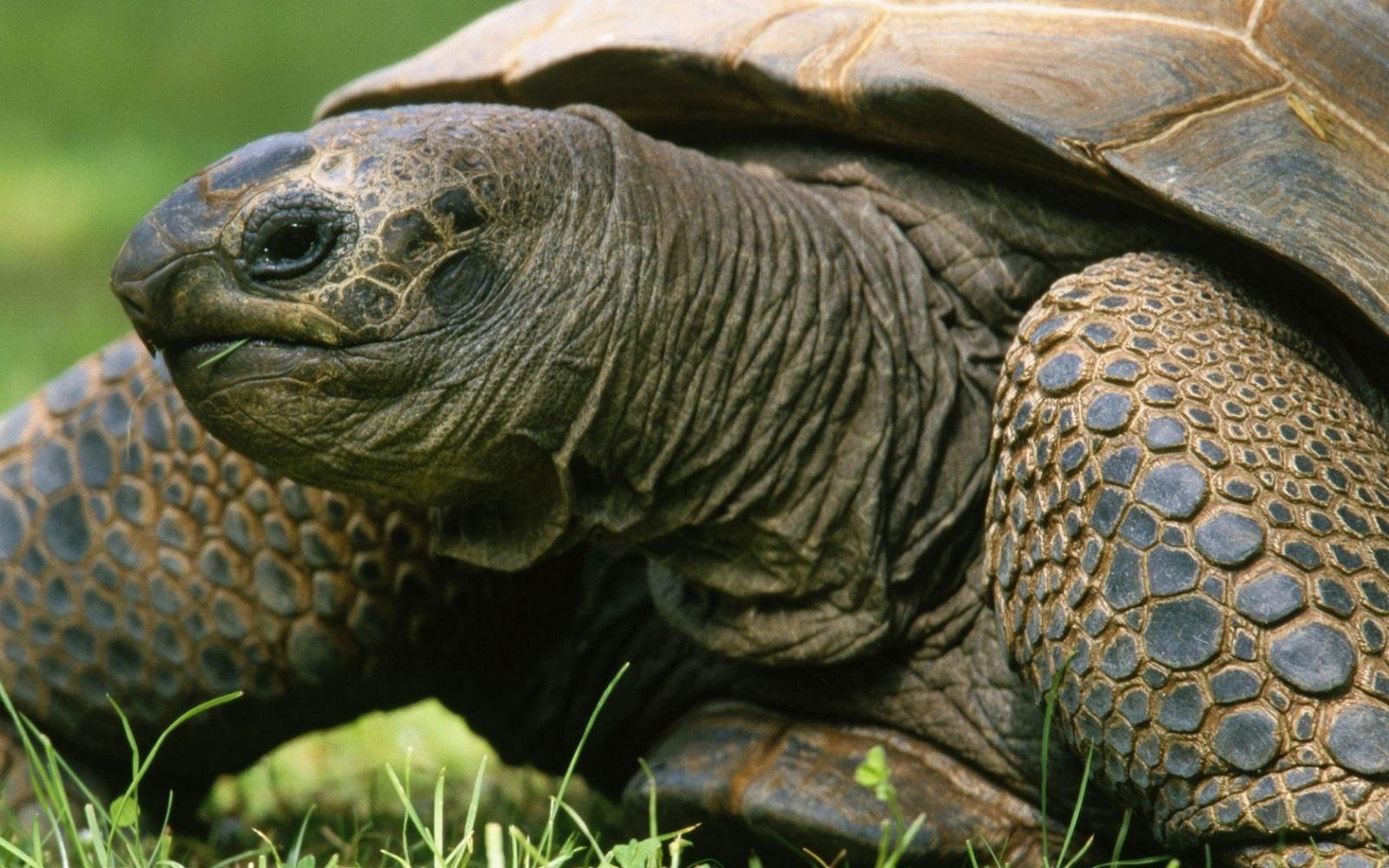 Аквариумные черепахи: виды и их особенности