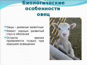 Подборка схем и описаний для вязания крючком овечки