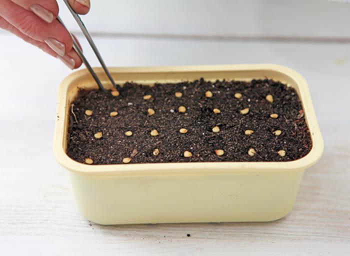 Как вырастить рассаду перца в домашних условиях - ищи ответ здесь!
