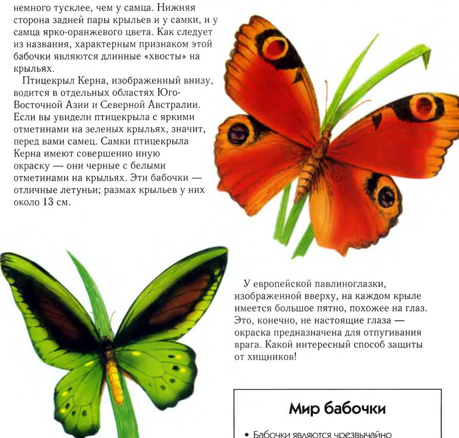 Самые большие бабочки в мире, удивительные фото
