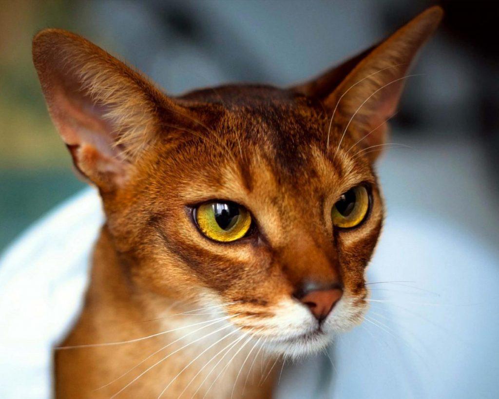 Вещи с кошачьим характером: 20 идей необычных подарков для любителей кошек