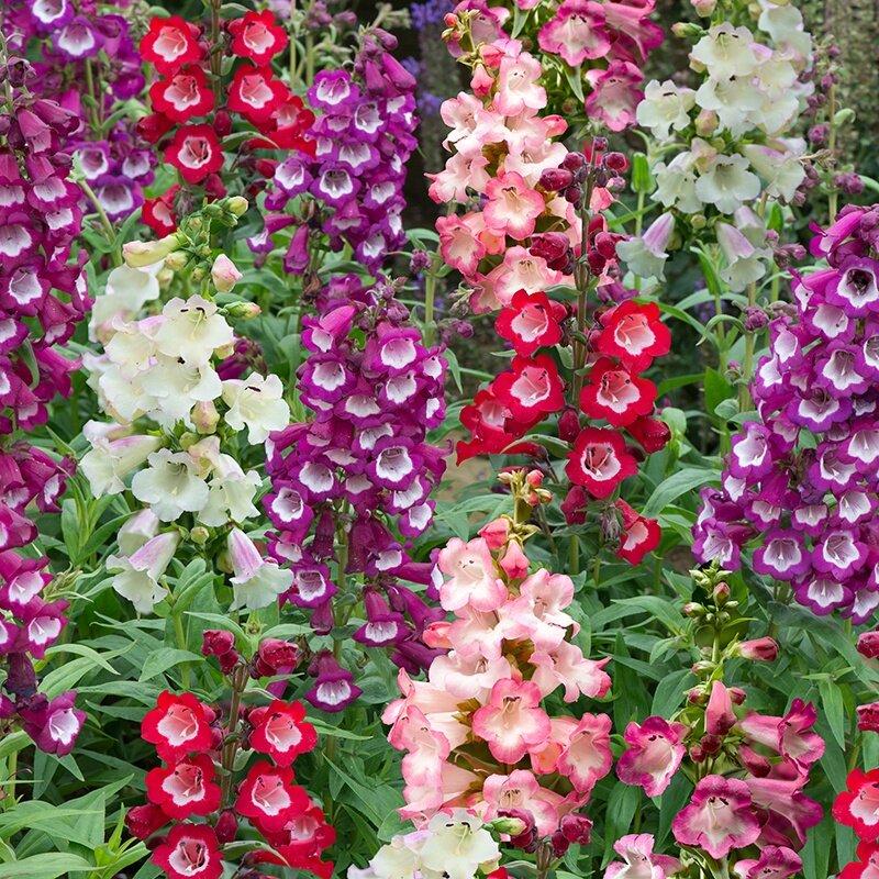 Название цветка. разновидности цветов. самые необычные цветы - sadovnikam.ru