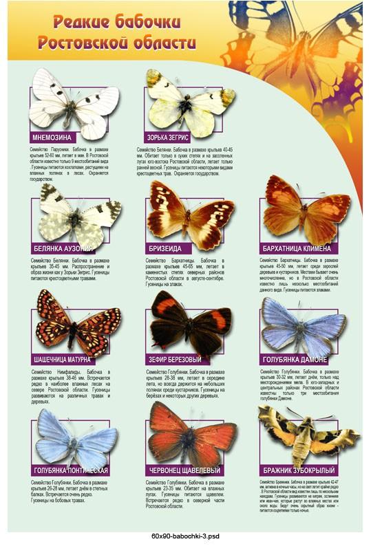 Маджонг бабочки - играть бесплатно онлайн на весь экран