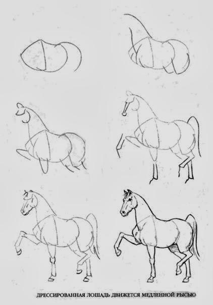 Как нарисовать лошадь в полный рост карандашом поэтапно