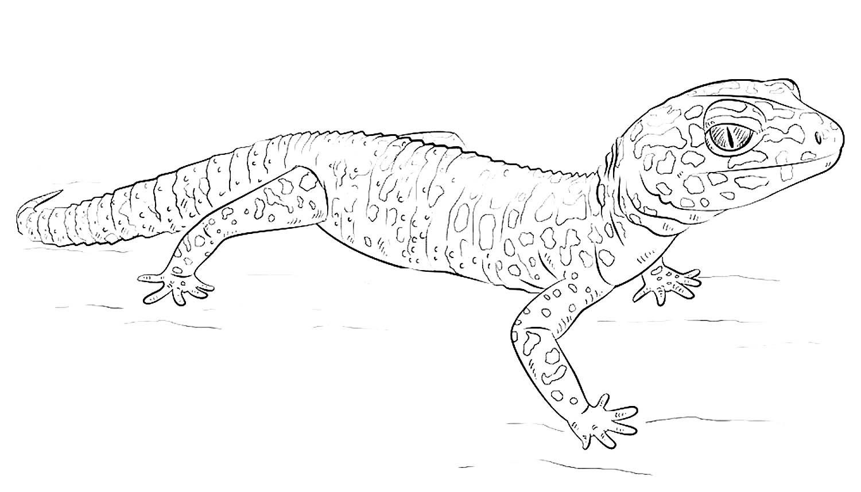 Как нарисовать ящерицу карандашом поэтапно для начинающих и детей: пошаговая инструкция. как нарисовать ящерицу на камне?