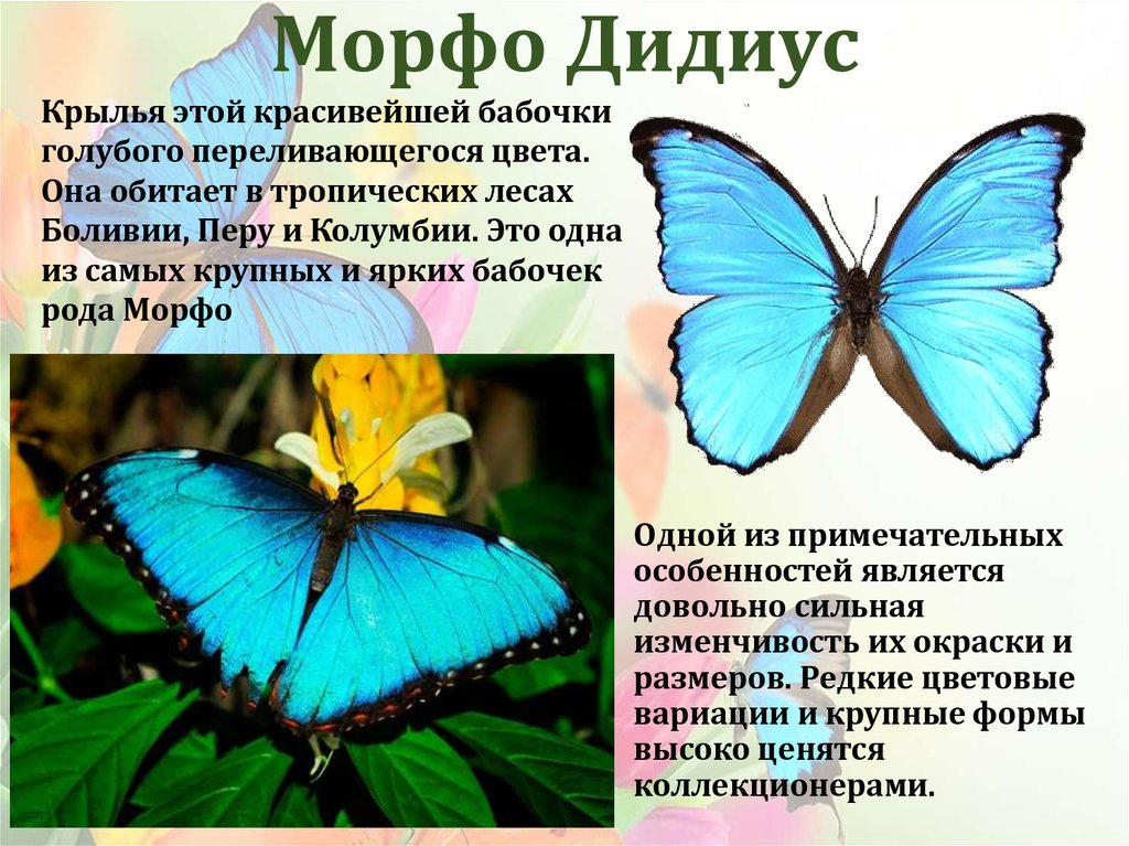 Фото самых красивых бабочек с названиями и описанием