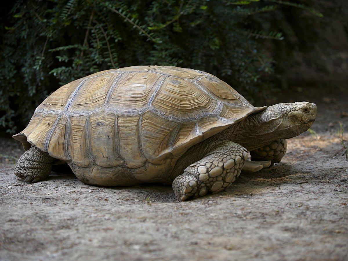 Тату черепаха есть вариантыдля девушек и парней