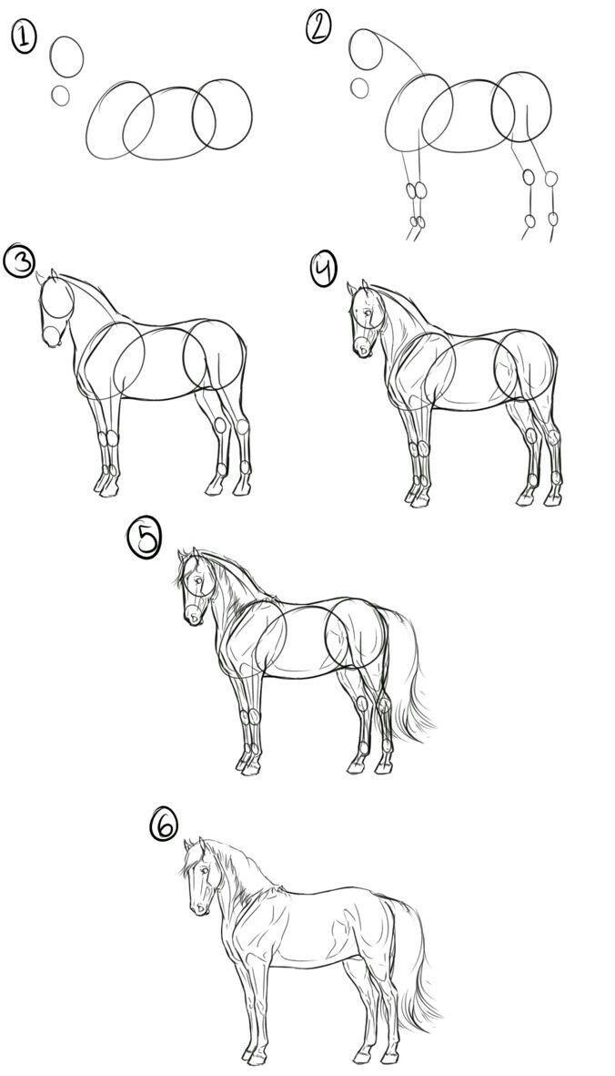 Как нарисовать лошадь поэтапно карандашом начинающим, фото и видео