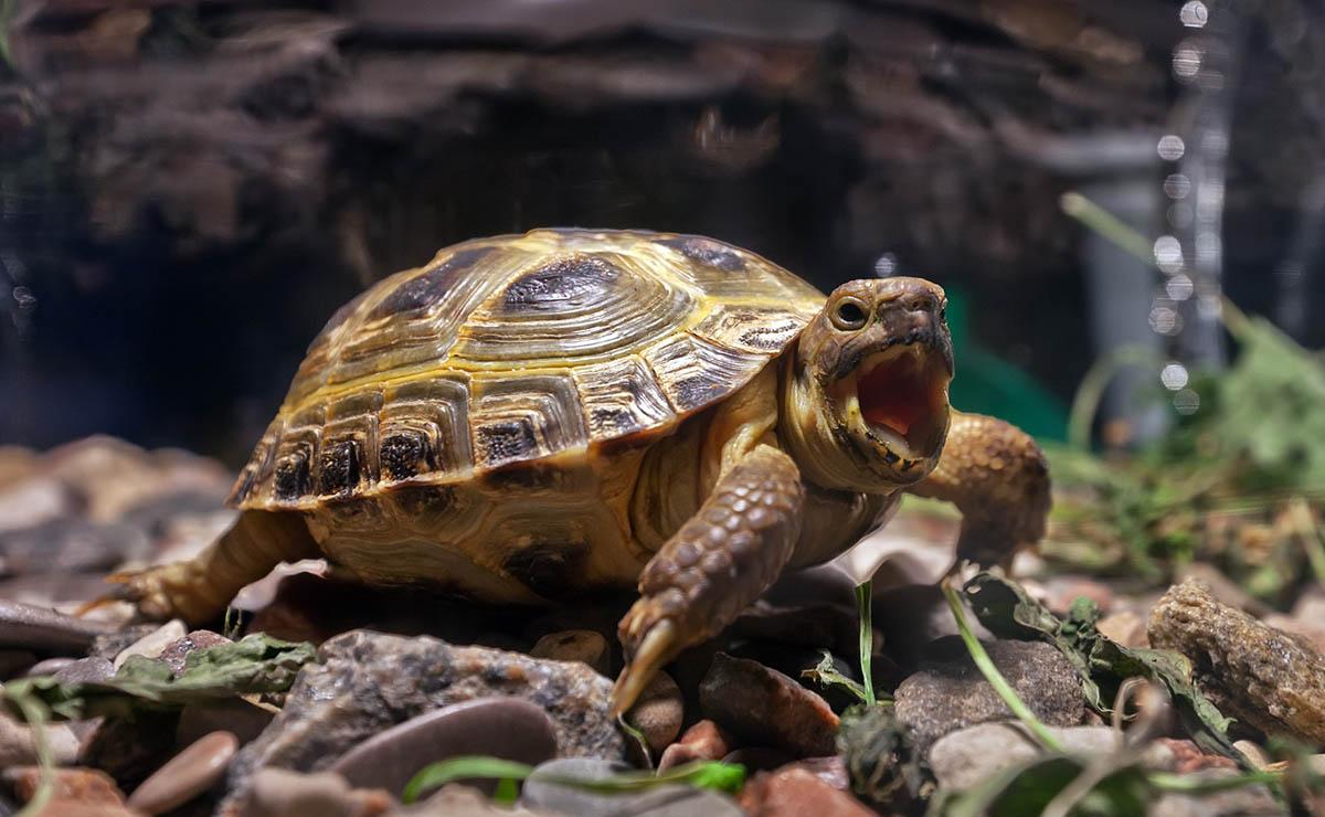 Виды домашних черепах: аквариумные породы для дома (водные, маленькие, сухопутные), фото, классификация