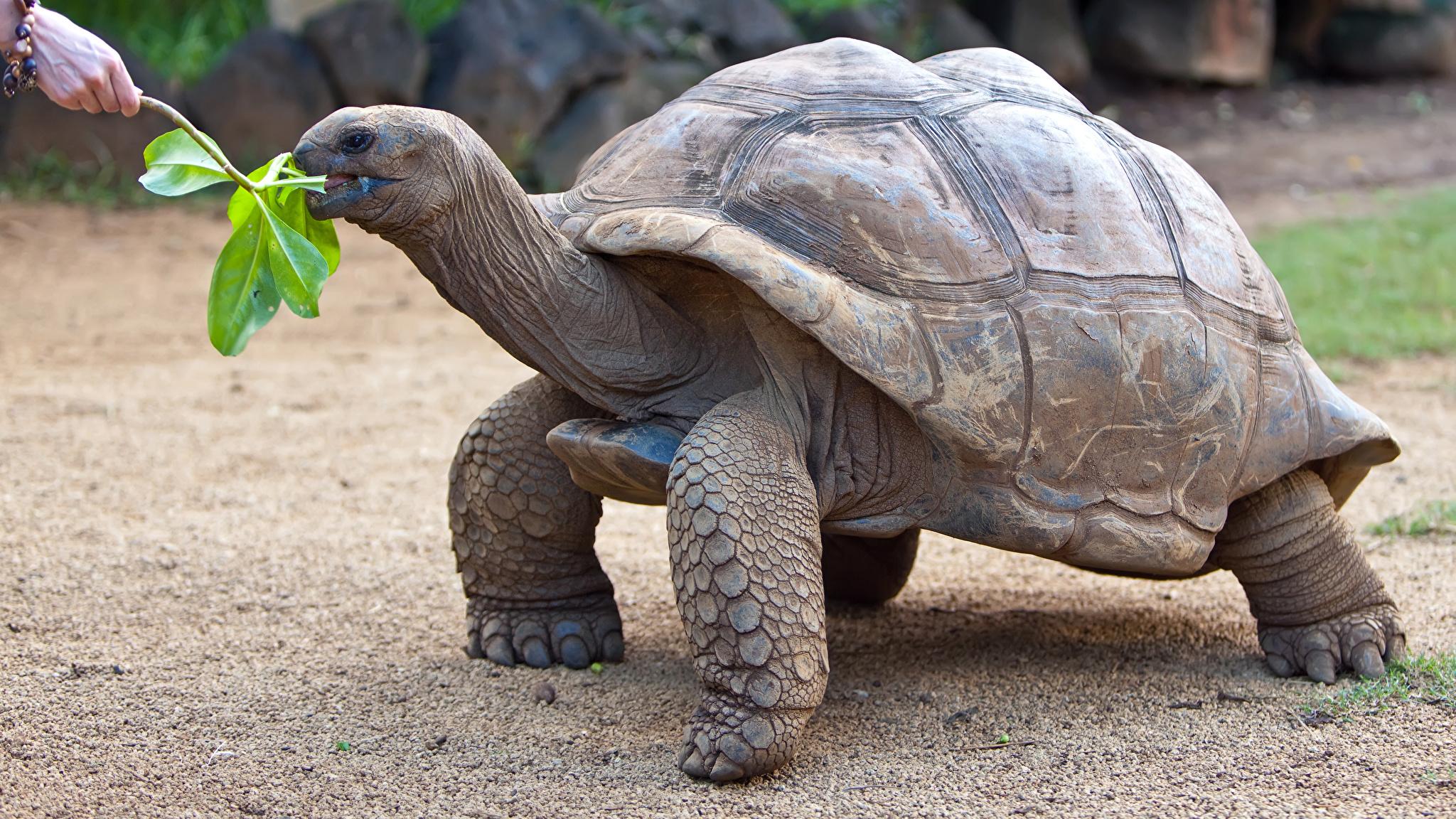 Аквариумные черепахи: виды, особенности, фото аквариумные черепахи: виды, особенности, фото