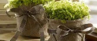 Мастерилка. 12 способов декорирования цветочных горшков - наш дом - медиаплатформа миртесен