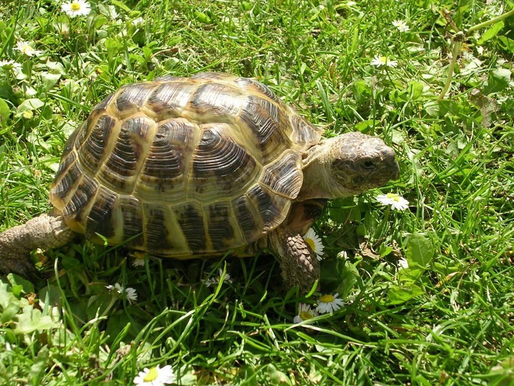 Красивые и необычные черепахи