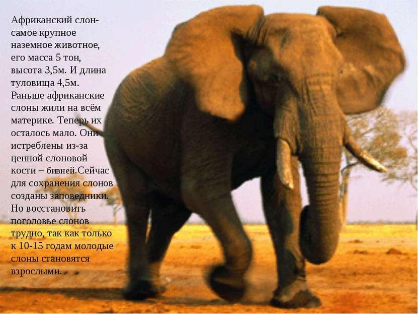 Слон — краткое описание, процесс размножения, интересные факты (89 фото + видео)